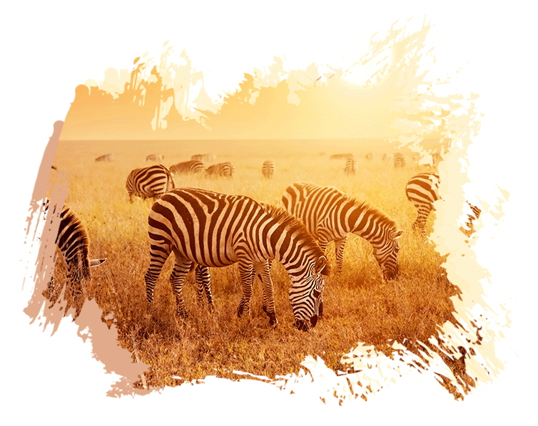 Travel Deals to Africa